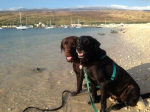 Kimo and Pepper enjoy swimming and frolicking at Kawaihae Harbor's shipping terminal and military landing site.