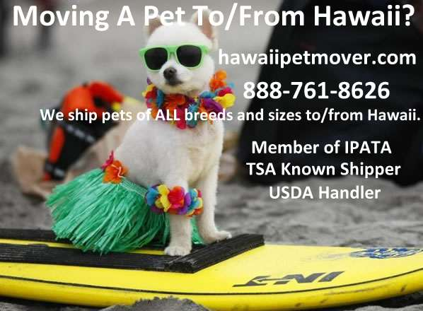 Lava Dogs 808 - Hawaii-dog Ad2
