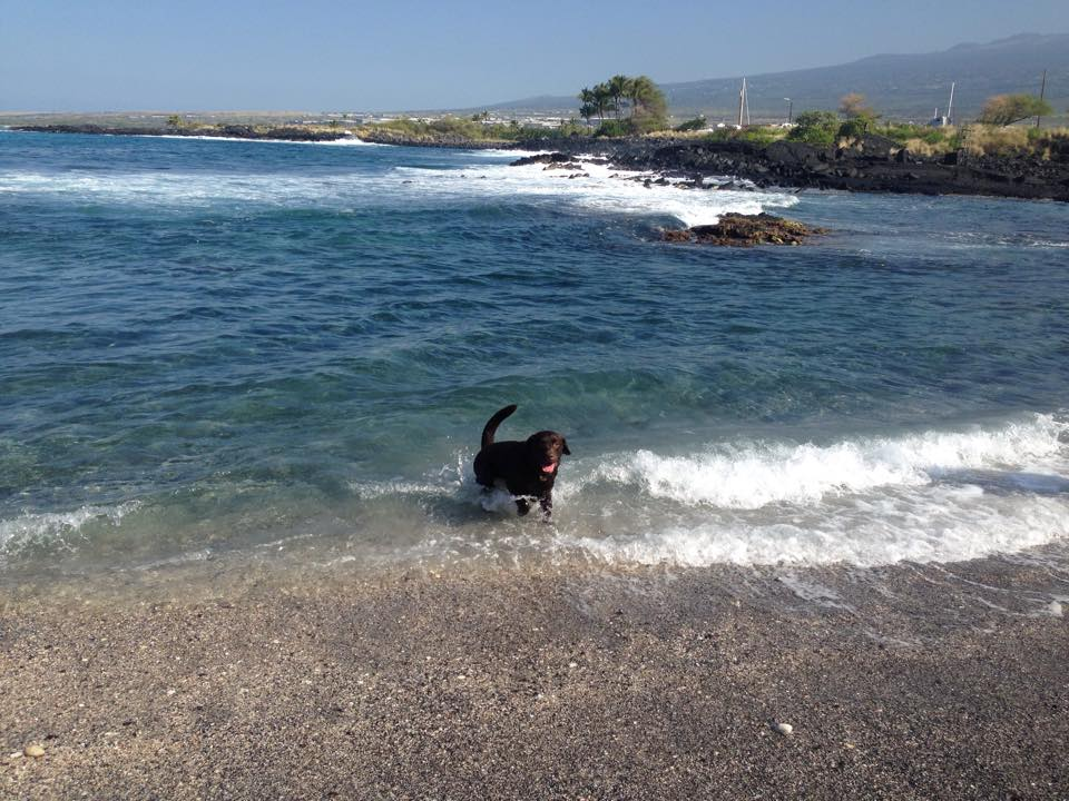 Honokohau Harbor Dog Beach Kimo