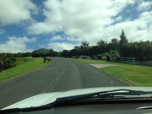 Free roaming horses and cattle...The true Hawaii Island paniolo experience!