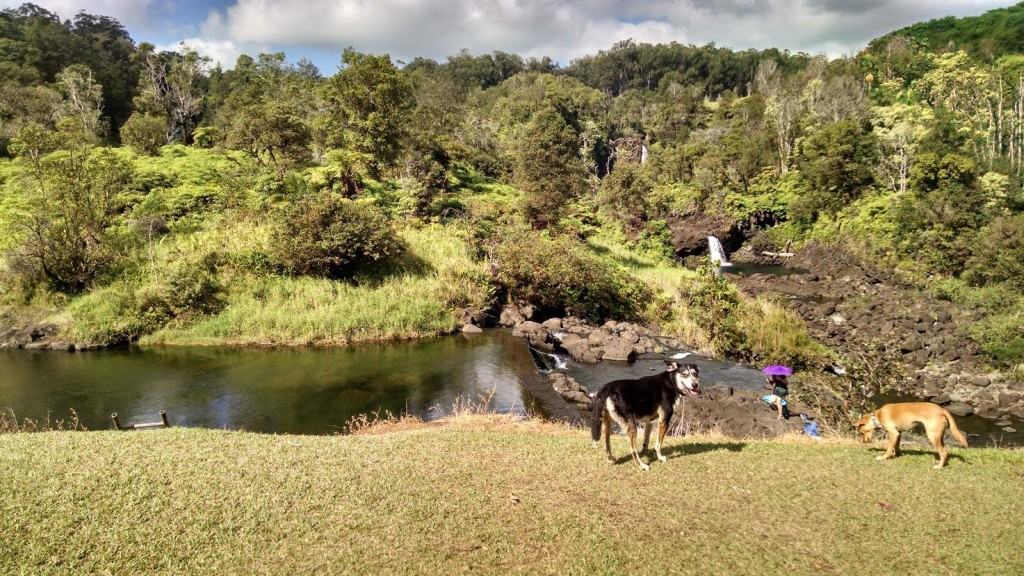 Hilo Watershed trail2